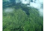 Mountain tropical forest (Yawan, Saruwaget range) in Papua New Guinea (Photo: Petr Klimes). Mountain tropical forest (Yawan, Saruwaget range) in Papua New Guinea (Photo: Petr Klimes).