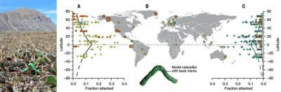 Dummy caterpillars reveled the worst places in the world to be the prey