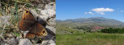 Eurasian butterfly inhabited vast steppe areas during both glacial and interglacial times