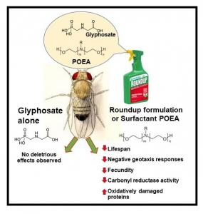 Toxicity of glyphosate, myth or reality?