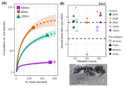 Why are the canopy ant communities the most diverse in mid elevations revealed by exploration of over a thousand tropical trees