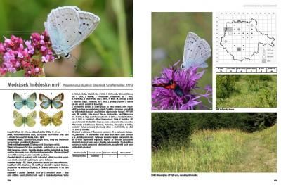 Butterflies and burnet moths of South Bohemia
