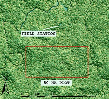 Permanent 50 ha forest dynamics plot in New Guinea